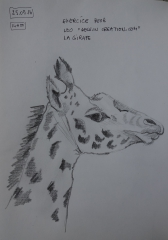 girafe de leo1.jpg