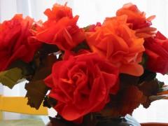 roses rouges 004.jpg