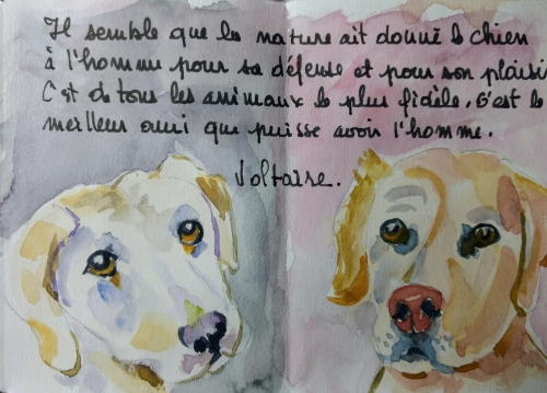 Petit livre chien 7.jpg