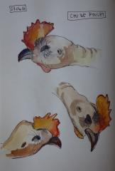 cou de poulet1.jpg