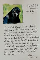 Corneille noire 3.jpg