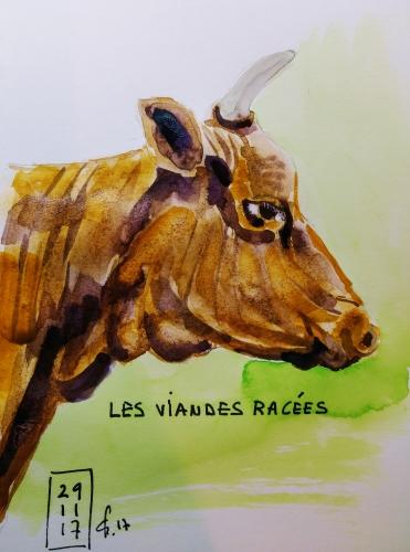 vache brune.jpg