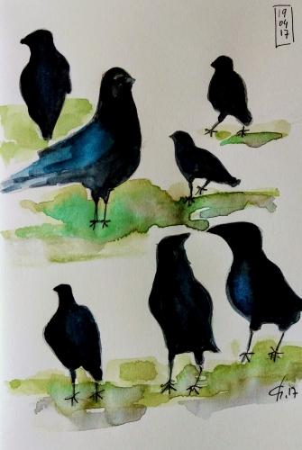 Corneille noire.jpg