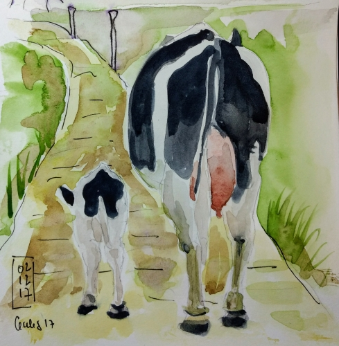 vache noire.jpg